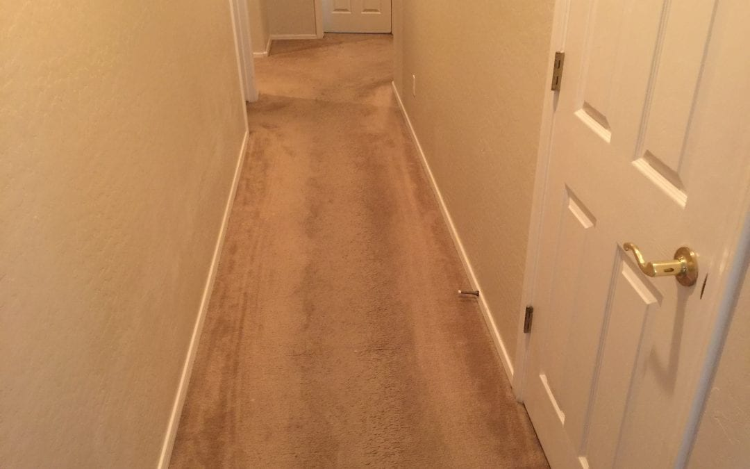 Carpet Cleaning Professionals in Paradise Valley