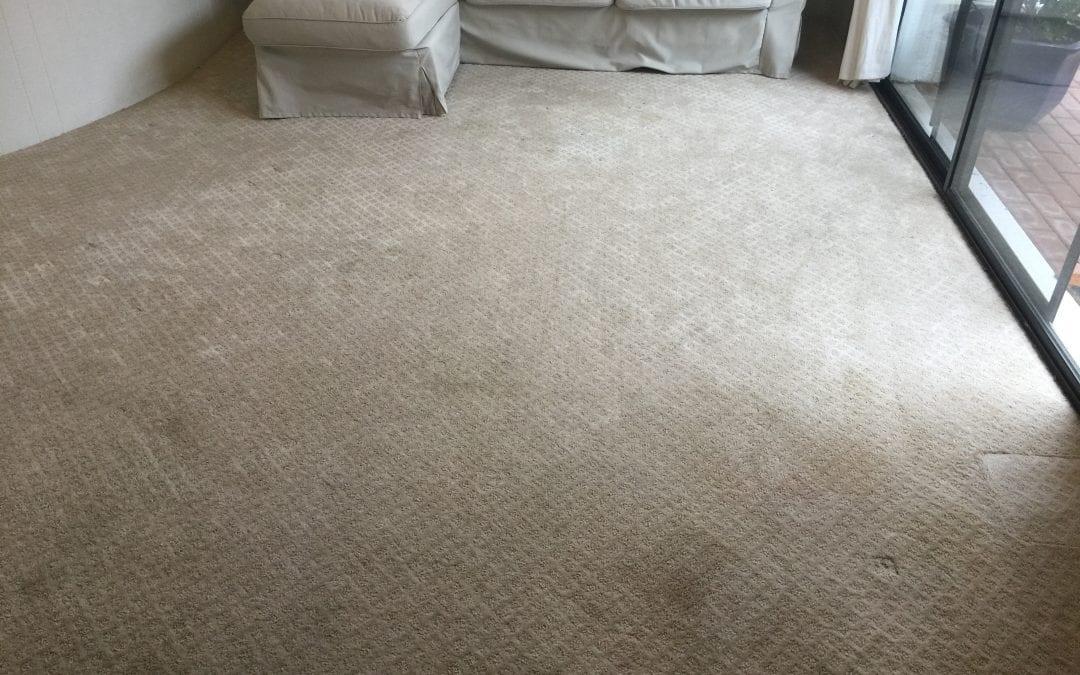 Phoenix, AZ: Carpet Cleaning
